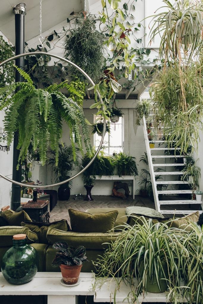 Living Room Full of Plants