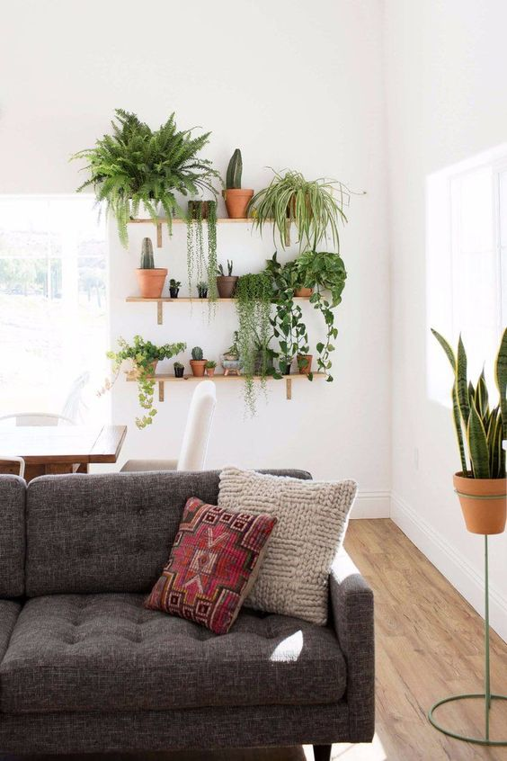Plants On Shelves Living Room