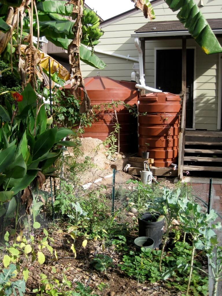 Rainwater Harvesting In Winter Gardening