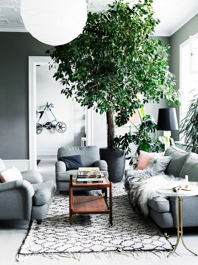 Cozy Grey Living Room Large Plant