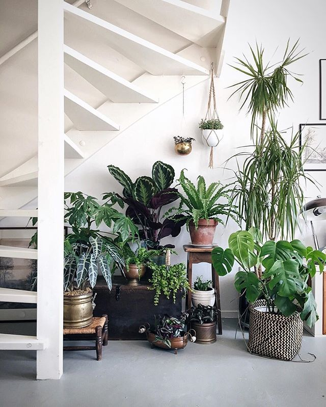 Plant Decor Under Staircase
